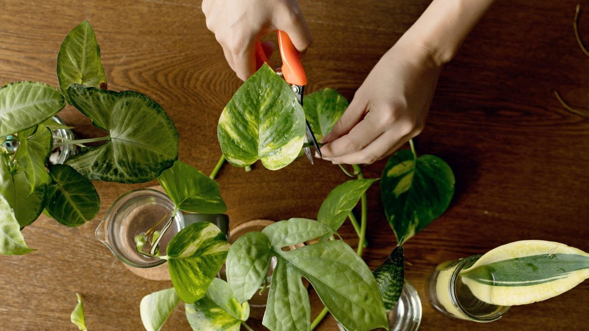 Can your green thumb help you make green backs?
