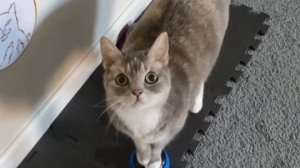 This Genius Cat Can 'Talk' to Her Owner By Pressing Buttons