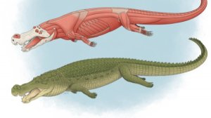These Crazy 'Terror Crocodiles' Ate Dinosaurs with Huge Teeth