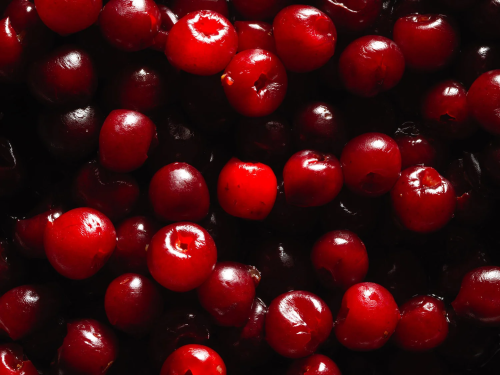Turns out, maraschino cherries are the real-deal forbidden fruit