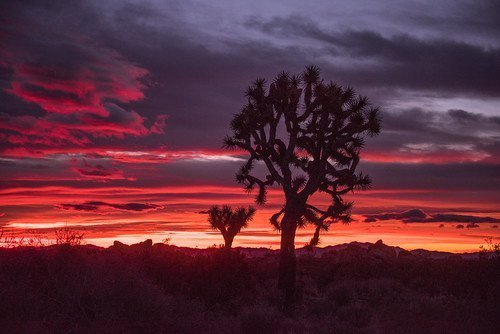 Your Guide To Experiencing Joshua Tree