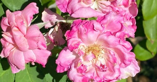 Beating the Heat: Protect Plants From Heat Stress