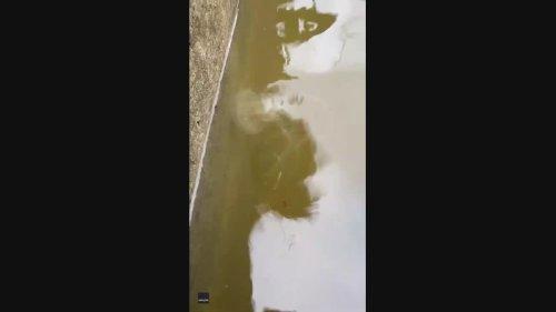 Jellyfish Seen in Flooded Galveston Island Yard After Hurricane Nicholas