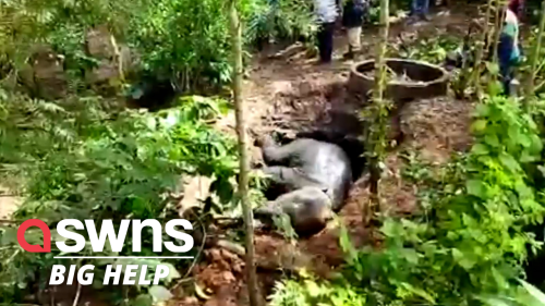 Rescuers try saving a baby elephant after it fell down a well in Bhadragola, India