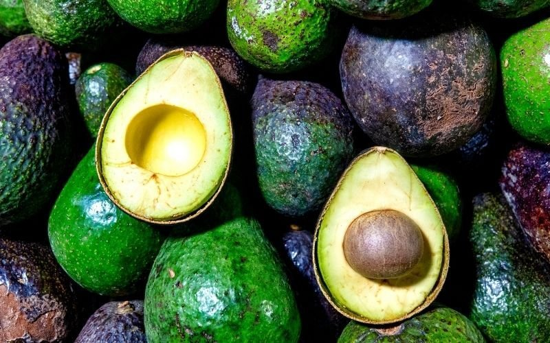 Here is Why People Are Going Nuts Over Avocados, Dietitians Explain