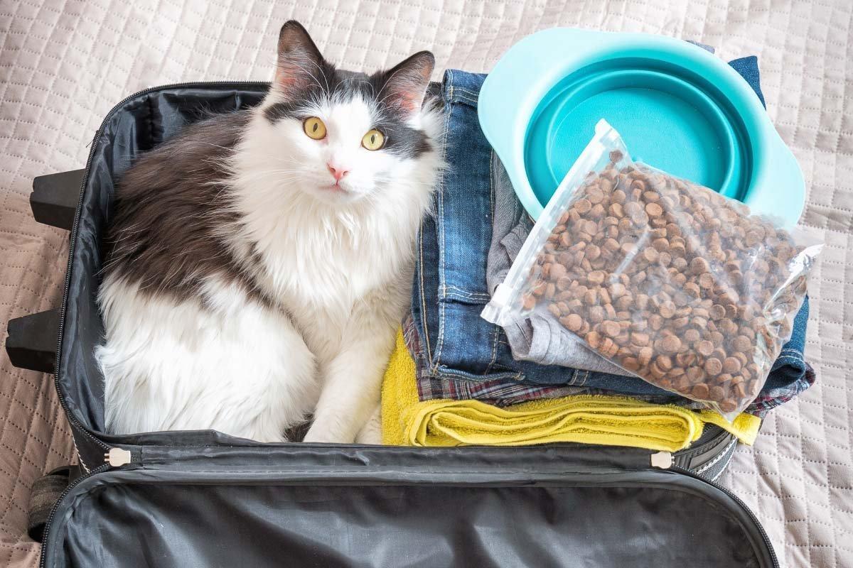 10 Brilliant Cat Hacks