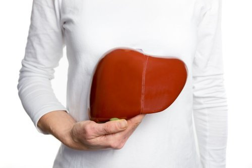 Common Reasons for a High Liver Enzyme Count — Plus Other Liver Facts