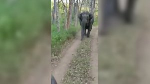Video Shows Jeep Full or Tourists Being Chased By Two Elephants