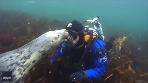 Seal of Approval: Curious Pinniped Gets Up Close and Personal With Diver