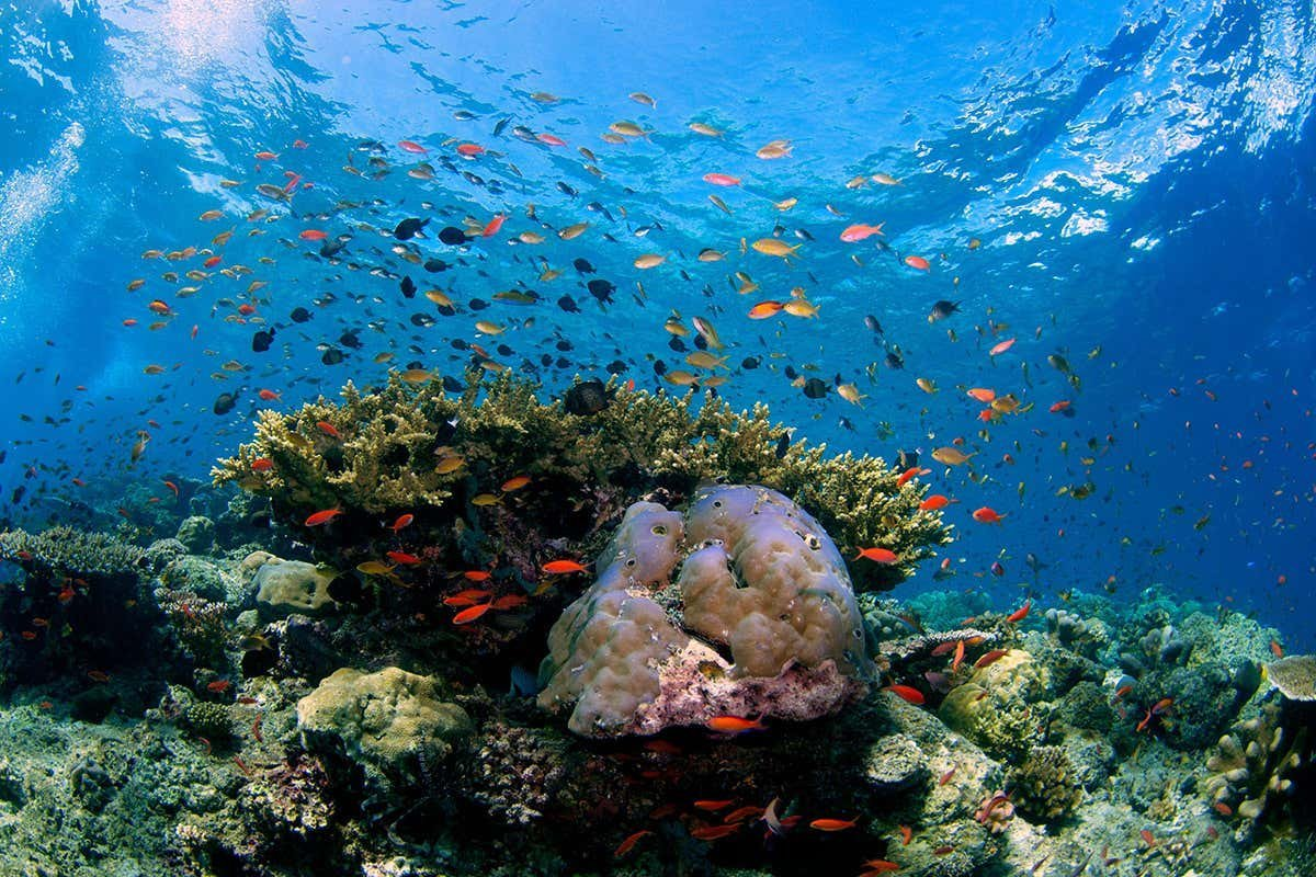 Biodiversity: what is it and why is it critical to life on Earth?