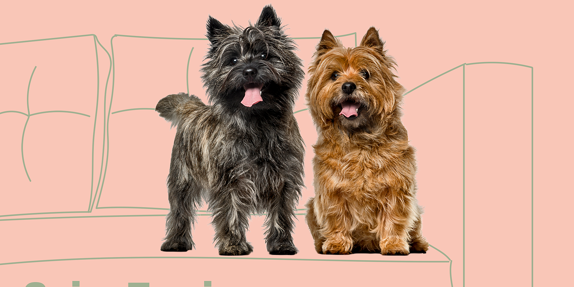 Which Dog Breed Is Most Compatible With Your Zodiac Sign?