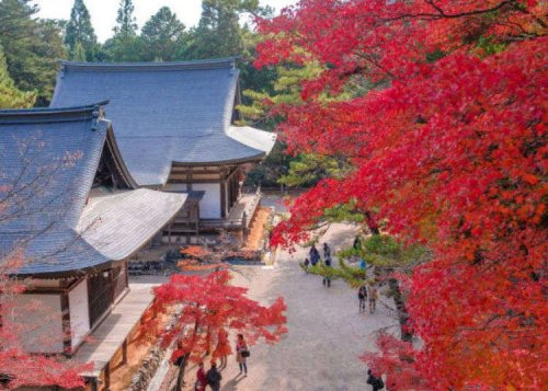 5 Stunning Places to See Fall Colors in Kyoto