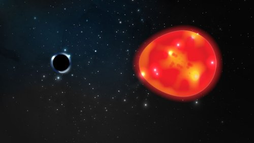 Newfound black hole may be the closest to Earth—and 4 more captivating tales