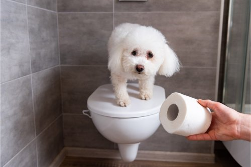 5 Pretty Gross Things Dogs Like to Do and Why