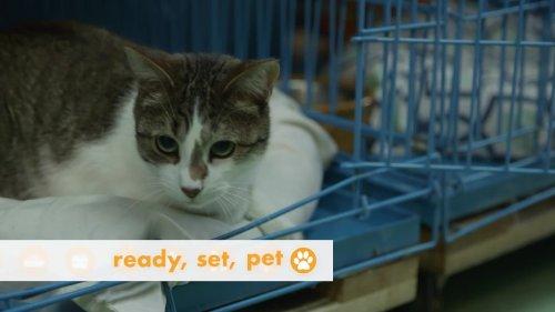 Ready Set Pet Mini Episode - 1