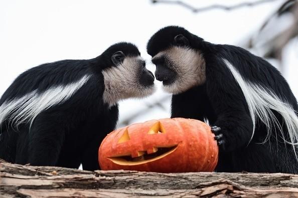 Animals + Pumpkins