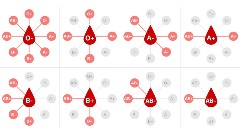 Discover blood types
