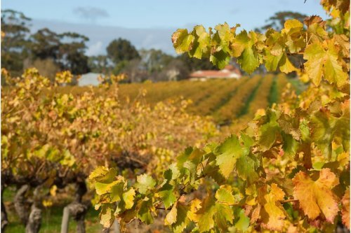5 of the World's Most Fantastic Wine Regions