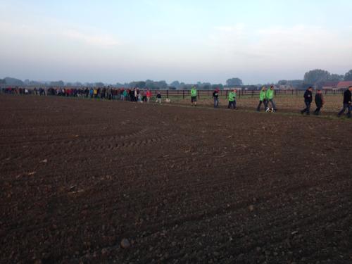 Een sliert Dauwtrippers in Belle's fields 2015.