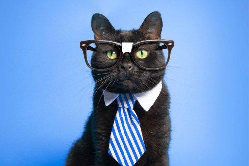 The World's Smartest Cat Breeds