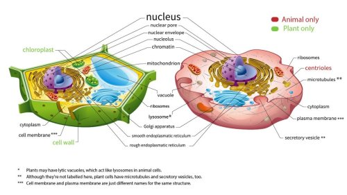 Here's How Plant and Animal Cells Are Different — Plus More Cellular Biology