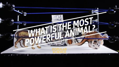 What is the Most Powerful Animal?
