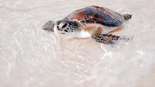 From sharks to sea turtles – how Dubai is protecting its marine life and coastline