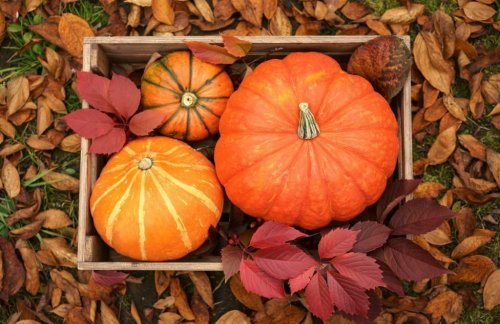 When Is the First Day of Fall? Fun Facts About the Fall Equinox