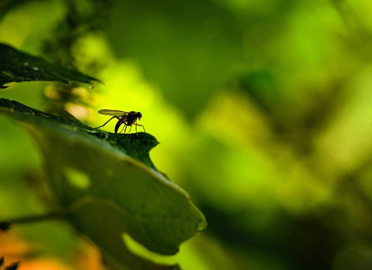 15 Natural Pest-Control Strategies for Your Home Landscape