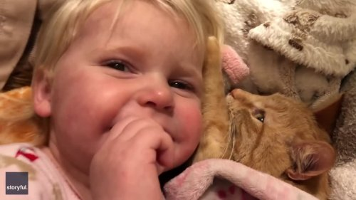 'Shush' - Toddler Demands Silence as She Grabs Nap With Pet Cat