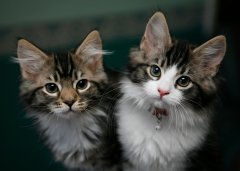 Discover types of cats