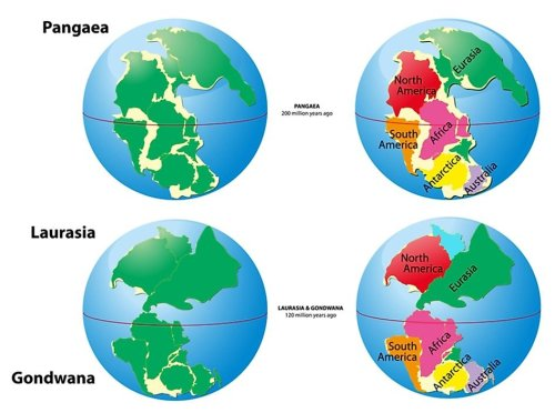 What was Pangea?