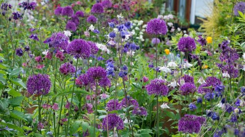 6 easy tasks to get your garden in shape this September