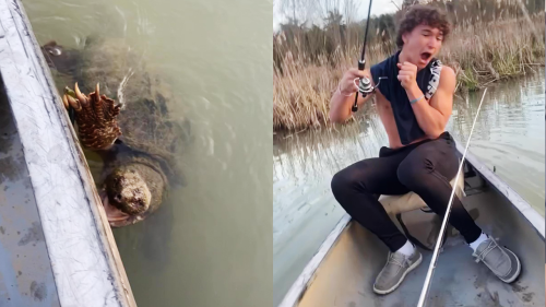 'Massive Turtle Pays Anglers a Visit While They're Fishing '