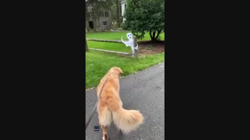 Paw-ranormal Activity: Dog Stops Bathroom Break to Growl at Ghost