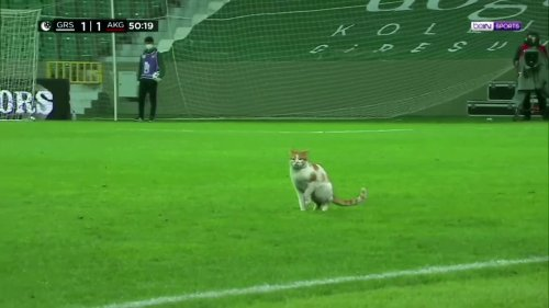 Cat invades pitch as soccer players break fast