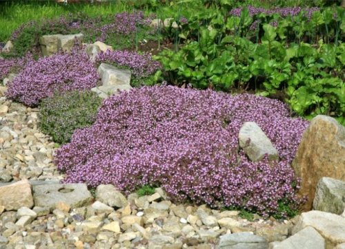 14 Uncommon Landscaping Ideas All Homeowners Should Consider