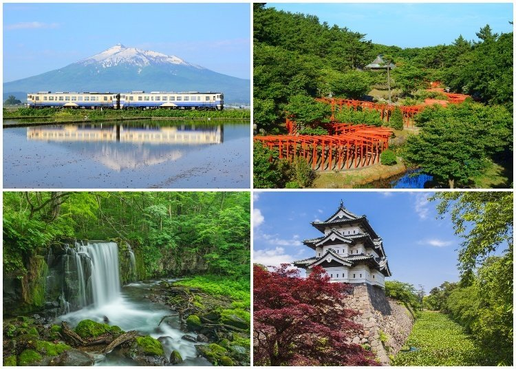 """Don't Miss Out On Japan's """"Blue Forest""""!"""