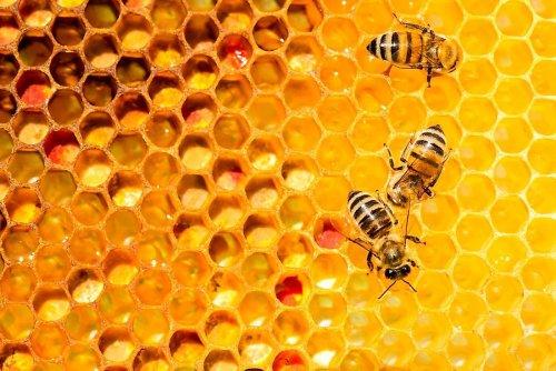 Why do bees make honey?