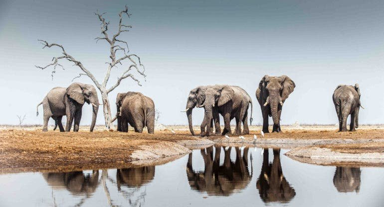 13 Photographers Give You a Peek at Incredible Africa