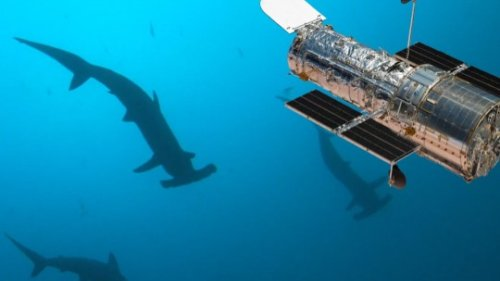Do Whale Sharks and the Hubble Telescope Have a lot of Things in Common?