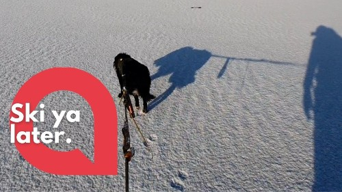 57-year-old man on skis gets pulled across a snow-covered beach by his DOG