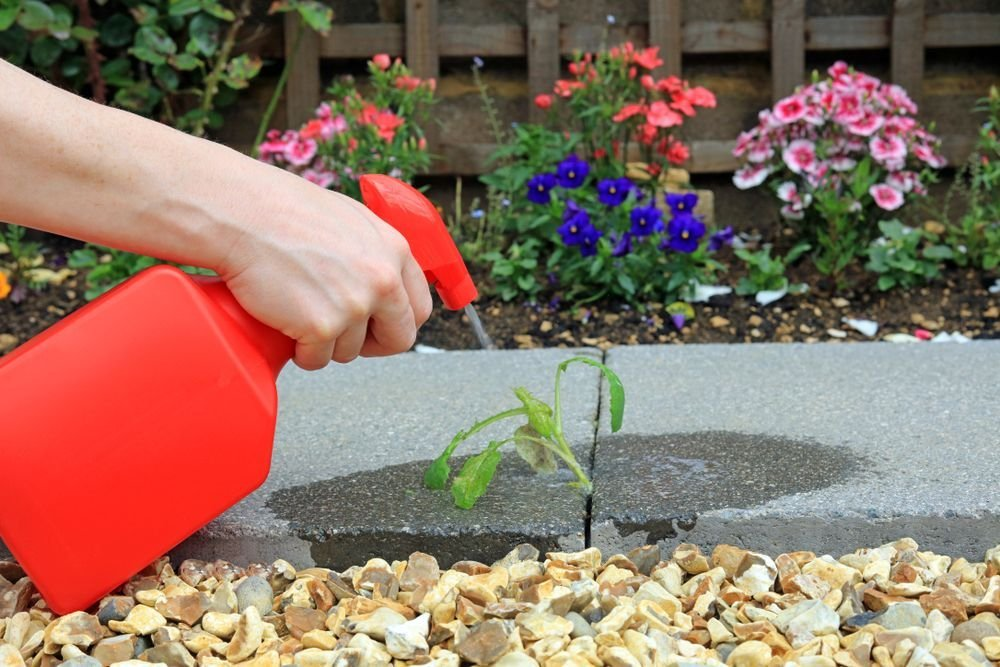 Natural Ways to Keep Weeds Out of Your Garden — Plus Other Gardening Tips