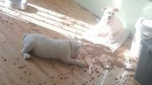 Guilty Pups Are Trying So Hard to Look Innocent After Making a Huge Mess