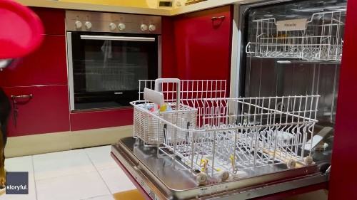 German Dog Helps Owner With Kitchen Chores