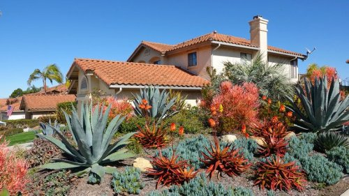 15 Drought Resistant Plants That Will Thrive Without Much Water