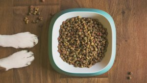 Feeding Your Dog a Raw Food Diet Could Be Giving Them a Raw Deal