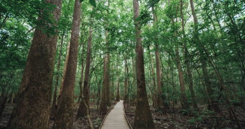 A Visit To The American Congaree National Park
