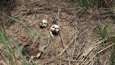 Disturbing details emerge following discovery of eight mass graves in DRC's Kasaï-Central