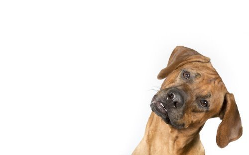 Concerning Dog Habits That Are Actually Very Normal